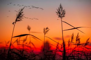 linnut punainen taivas